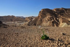 061_Izrael_2016_Negev_desert
